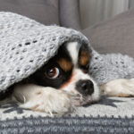 No Heat? No Worries, Just Call for Furnace Repair Today | Chattanooga, TN